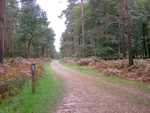 Cycle route through Denny Lodge Inclosure - Image by Jim Champion