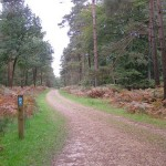 Cycle_route_through_Denny_Lodge_Inclosure,_New_Forest_610
